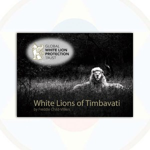 White Lions Postcards - Book of 39 cards