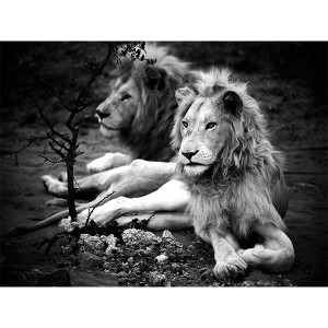 White LionPhotograph  Son of My Father - Zukhara|Mandla