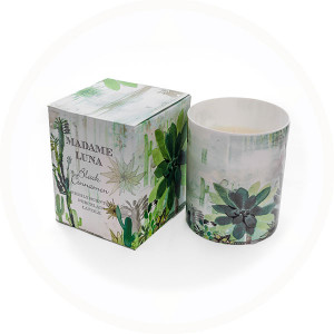 Succulent Design 2 Black Cinnamon fragrance boxed porcelain candle - AllisOne